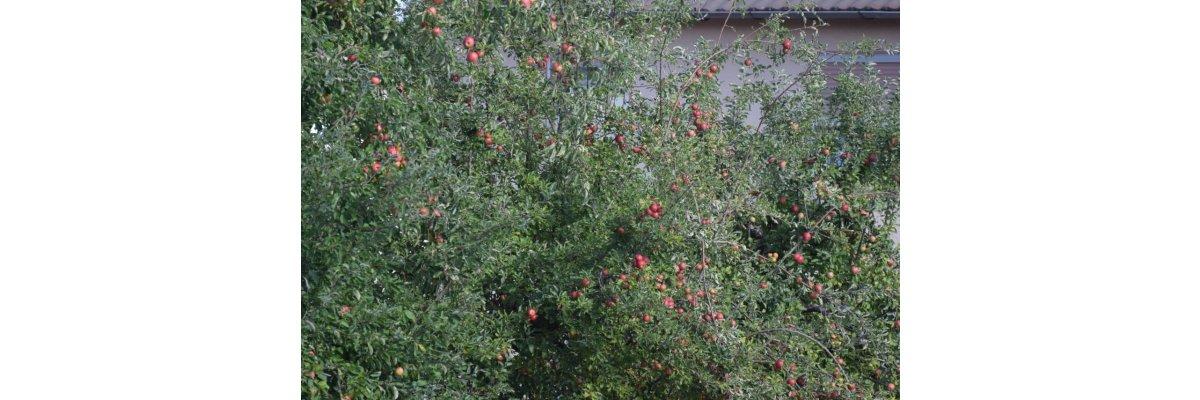 Der Herbst zieht ins Land -